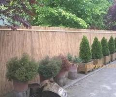 Trska za ograde,dvorišta,letnjikovce,bašte